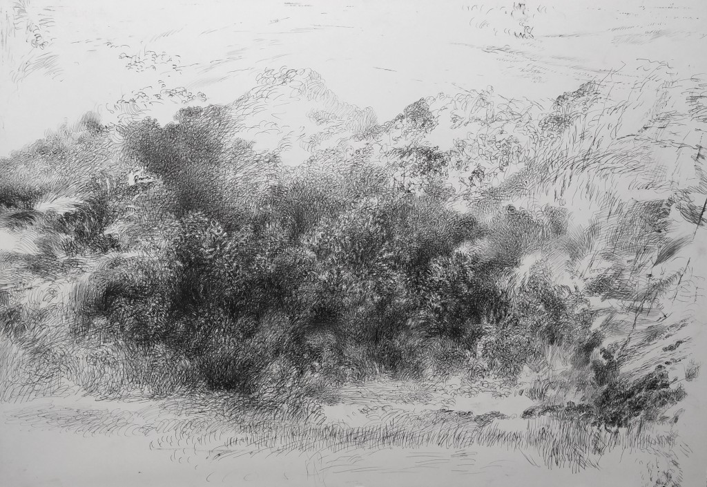 ballpint pen drawing landscape many brushes in front and little sign in the background. Autumn