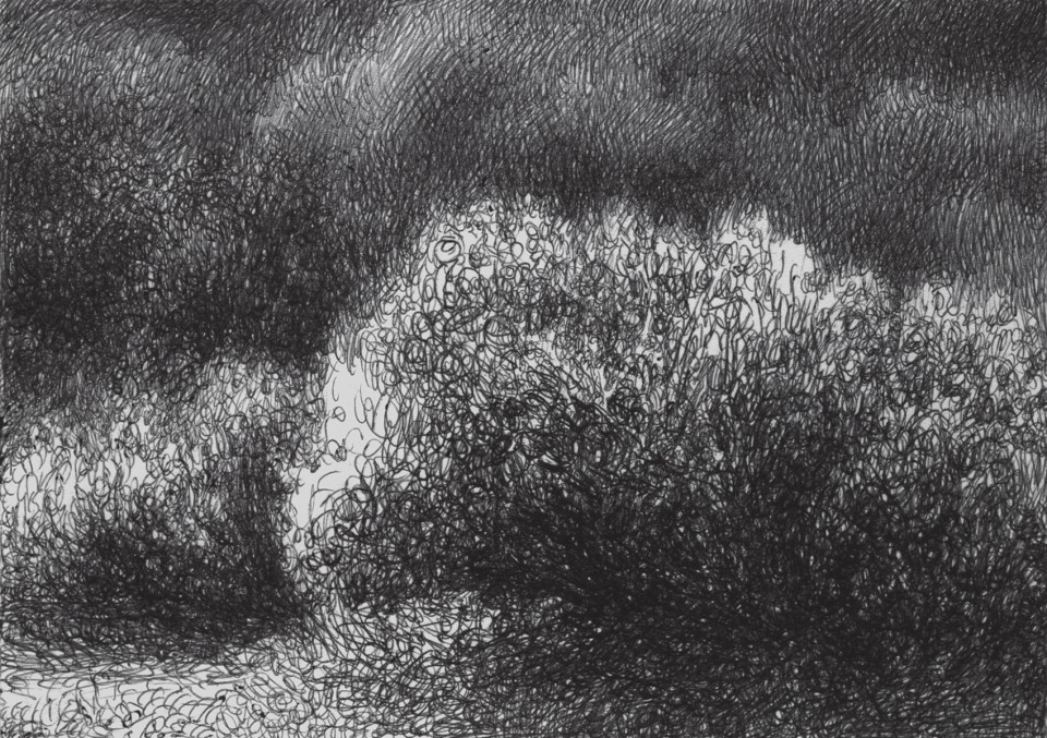 A bush and the busches behind in cross hatching ballpoint pen drawing
